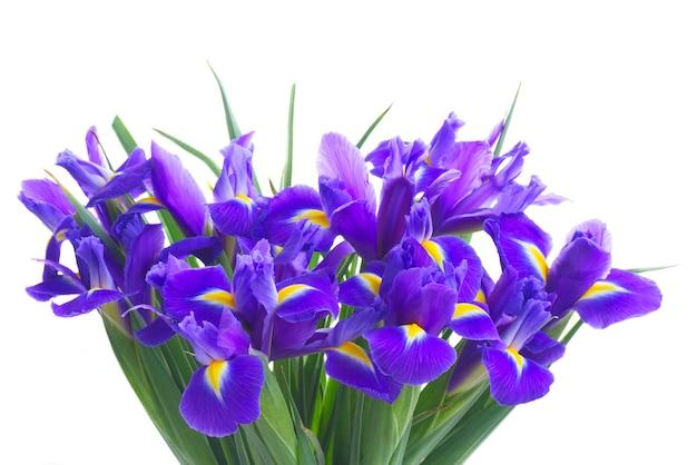 Blumenstrauß der iris lokalisiert auf weiß