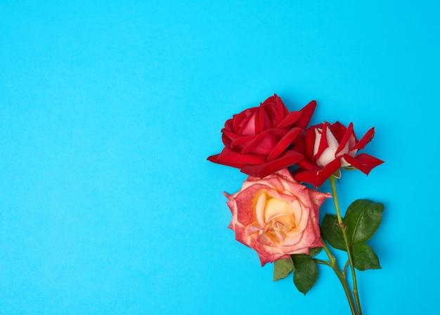 Blumenstrauß der mehrfarbigen blühenden rosen auf einem blauen hintergrund