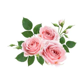 Blumenstrauß der rosa rosenblumen lokalisiert auf weißer wand. blumenarrangements entwerfen.
