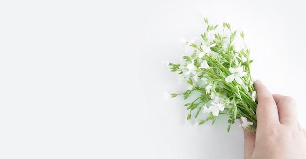 Blumenstrauß der weißen blumen in einer hand lokalisiert