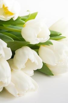 Blumenstrauß der weißen tulpe auf weiß. kopieren sie platz.