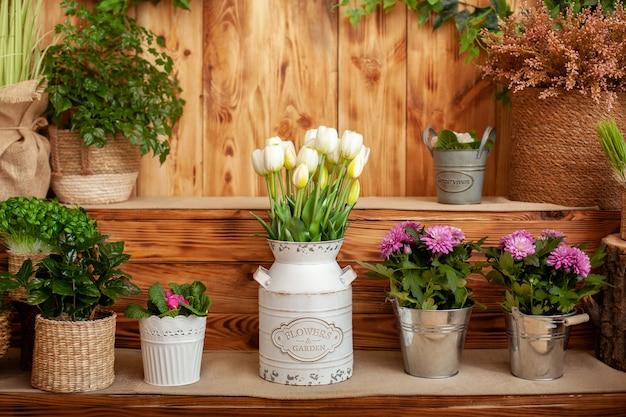 Blumenstrauß der weißen tulpen in einer vase und chrysanthemenblumentöpfe auf hölzerner terrasse.