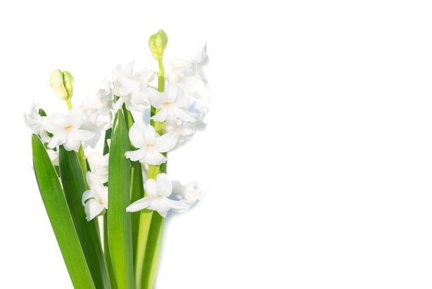 Blumenstrauß hyazinthe mit grünen blättern auf weißem hintergrund