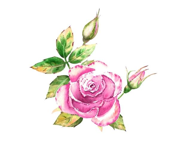 Blumenstrauß mit rosa rosenblüten, grünen blättern, offenen und geschlossenen blüten