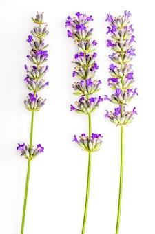 Blumenstrauß von blumen und von lavendelsamen auf weiß