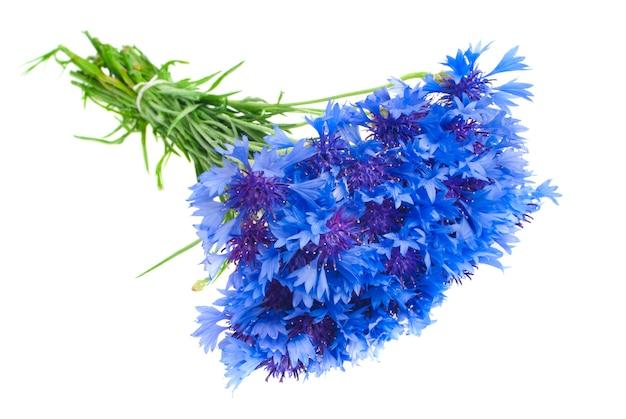 Blumenstrauß von den blauen kornblumen lokalisiert auf weißer wand. tiefenschärfe