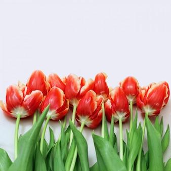Blumenstrauß von den roten tulpen, die auf einem licht liegen.