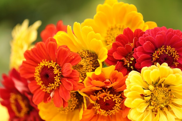 Blumenstrauß von gelb-orangeen und roten zinnien auf unscharfem grün