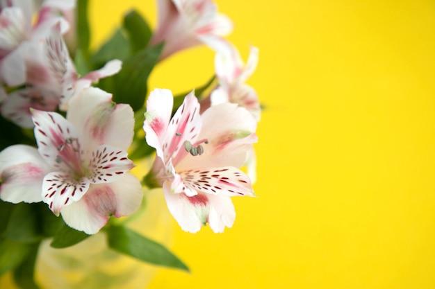 Blumenstrauß von hellrosa astromeria auf gelb