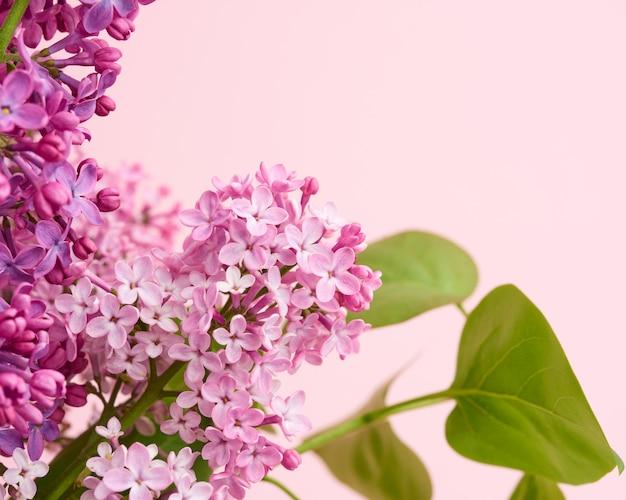 Blumenstrauß von lila und rosa flieder auf einem rosa hintergrund, makro
