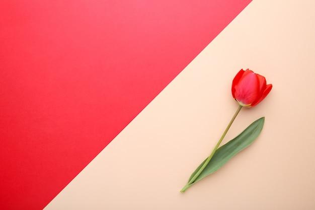 Blumenstrauß von roten tulpen auf buntem hintergrund
