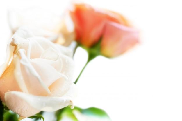 Blumenstrauß von roten und weißen schönen rosen