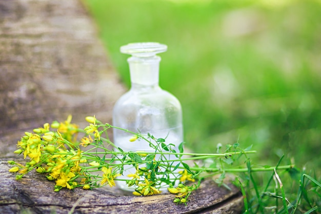 Blumenstrauß von wilden gelben hypericumblumen sammelte im sommer auf einer wiese und tinkturen. klare flasche mit elixierkorken. flasche medizin