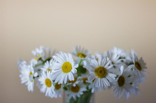 Blumenstrauß von wilden weißen gänseblümchen in einem vase