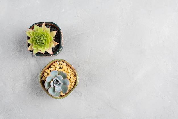 Blumentöpfe auf weißer tabelle mit kopienraum