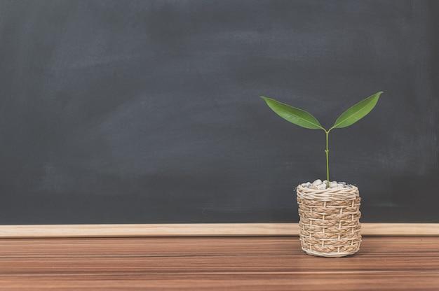 Blumentopf auf dem schreibtisch hintergrund tafel liebesbaumkonzept