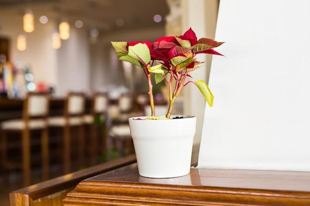 Blumentopf auf dem tisch im bibliothekscafé