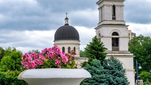 Blumentopf mit rosa blüten im zentrum von chisinau, moldawien