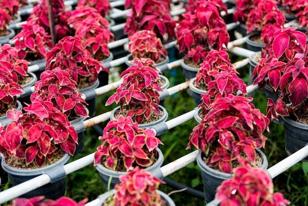Blumentopf regal