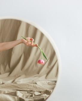 Blumentulpe im frauenhandreflexionsspiegel auf weißem hintergrund