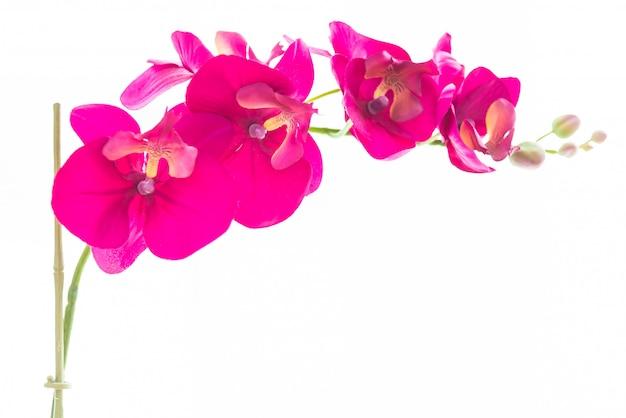 Blumenvase am fensterseitendekorationshaus