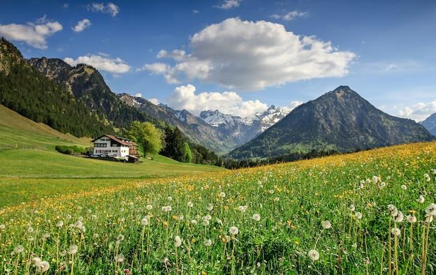 Blumenwiese mit schneebedeckten bergen und traditionellem haus. bayern, alpen, allgäu, deutschland.