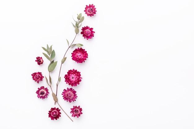 Blumenzusammensetzung. eukalyptuszweige und trockene blumen auf weißem hintergrund. flach liegen. draufsicht. speicherplatz kopieren - bild