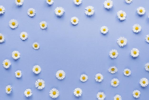 Blumenzusammensetzung. kamillenblüten auf pastellblau