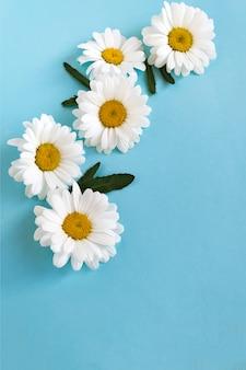 Blumenzusammensetzung von den weißen gänseblümchen auf blau