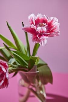 Blumenzusammensetzung von rosa weißen tulpen in einer glasvase