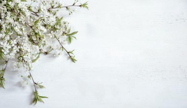 Blumenzweige an weißer wand