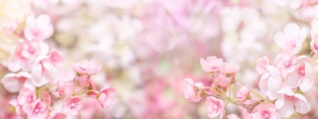 Blumiger hintergrund. zarte rosa blüten