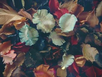 Blütenblätter mit vielen Farben überschneiden sich. Konzept hinter dem Design