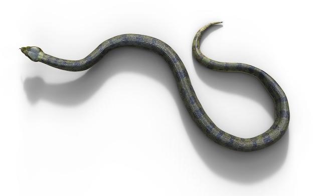 Boa constrictor die größte giftschlange der welt
