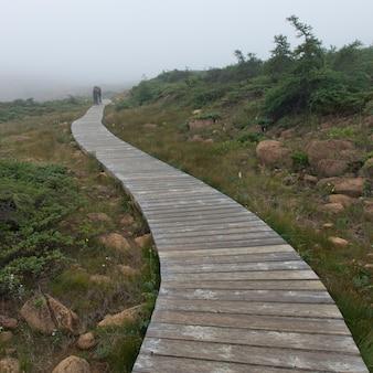 Boardwalk bei abteilung nr. 9, subd. a, gros morne nationalpark, neufundland und labrador, kanada