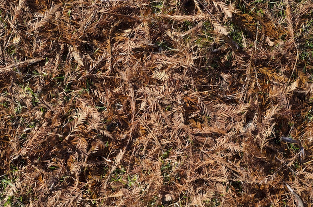 Boden bedeckt mit getrockneten kiefernnadeln und blättern