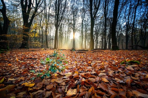 Boden bedeckt mit trockenen blättern, umgeben von bäumen unter dem sonnenlicht in einem wald im herbst