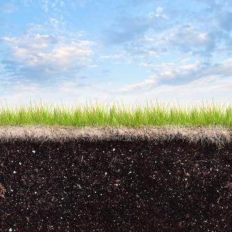 Bodengras und himmelhintergrund