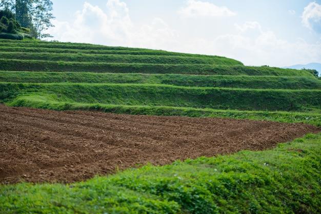 Bodenvorbereitung für das pflanzen von grünem tee