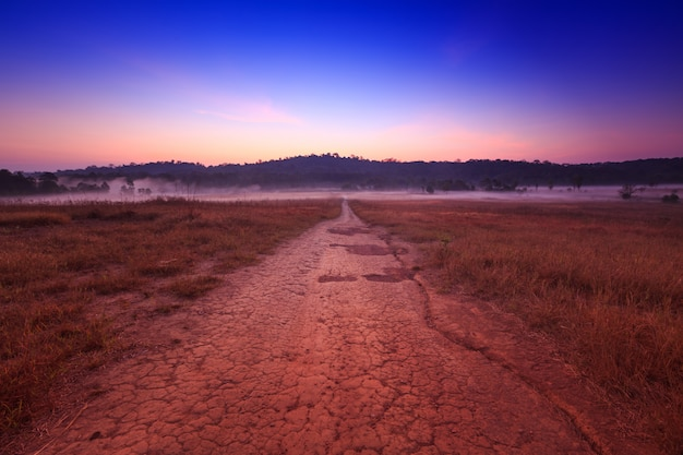 Bodenweg mit feld morgens am naturpark thung kamang, chaiyaphum, thailand