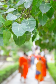 Bodhi oder peepal-blatt auf naturhintergrund, heiligem baum für hindus und buddhist