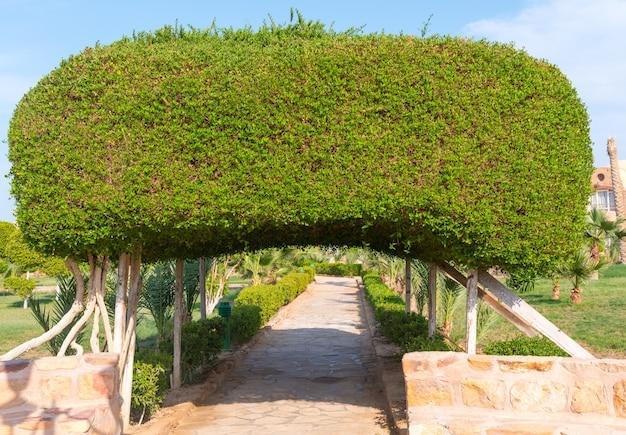 Bogen aus büschen
