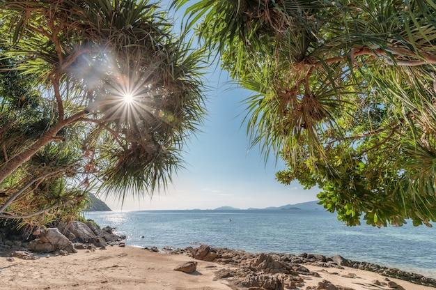 Bogen sie baum mit sonnenlicht auf dem strand mit tropischem meer