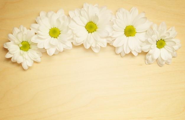 Bogen von gänseblümchen auf einem hellen holz