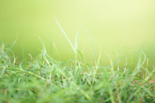 Bokeh des grünen grases, des schönheits-natur-hintergrundes, des frühlinges oder des sommers