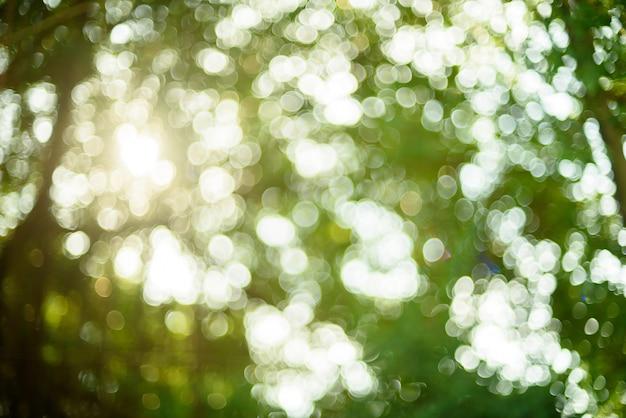 Bokeh hintergrund, grünes blatt verwischen hintergrund