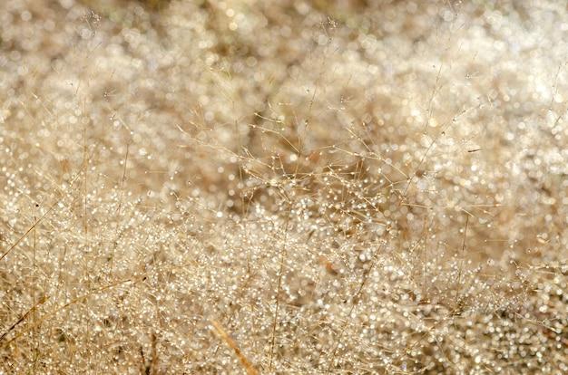 Bokeh-muster und wassertröpfchen auf dem unscharfen gras