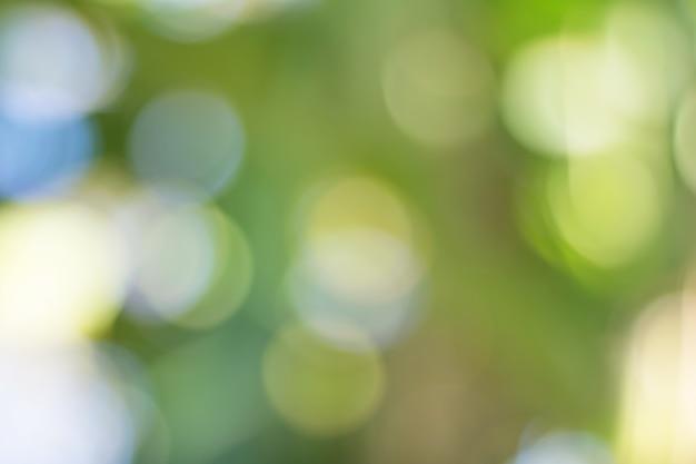 Bokeh von baum-blättern für naturhintergrund und speichern grünes konzept