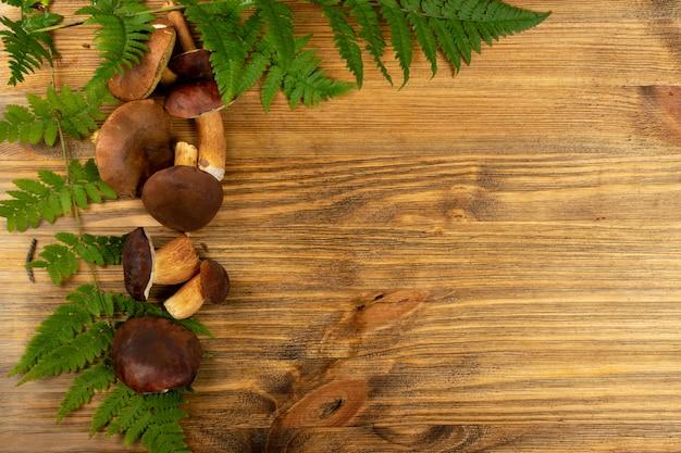 Boletus badius oder bay bolete mushroom collection draufsicht