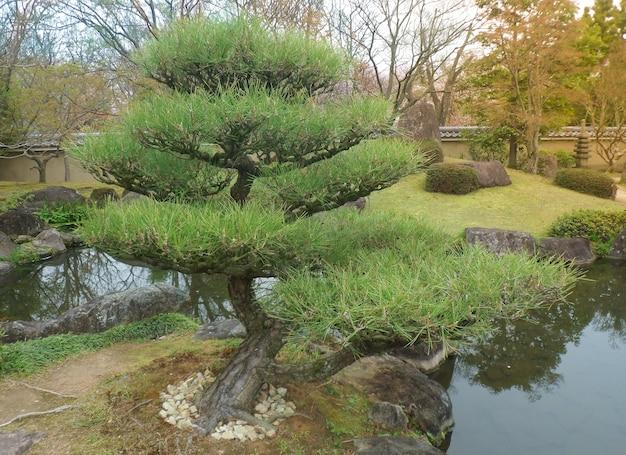 Bonsai-bäume in einem garten der japanischen art